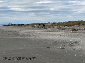 海岸での調査の様子